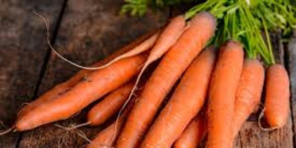 The Humble Carrot