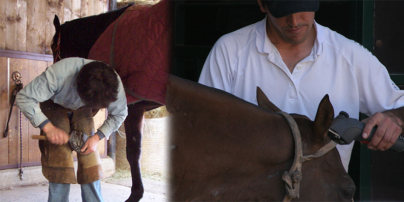 Quid Pro Quo or: The Careful Art of Caring for Your Horse